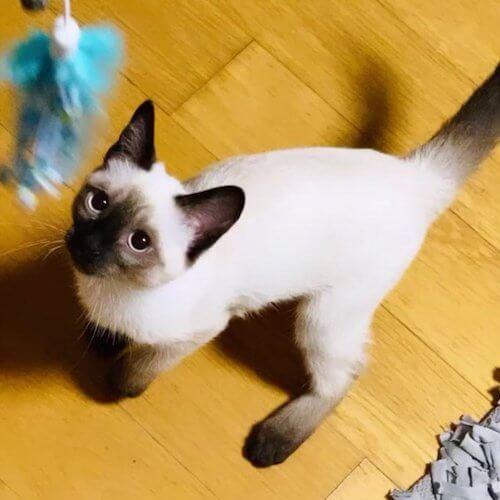 ルイス 猫