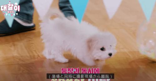 テガリ チョンロ 犬