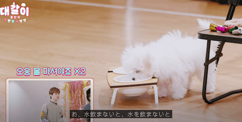 nctdream チョンロ テガリ 犬