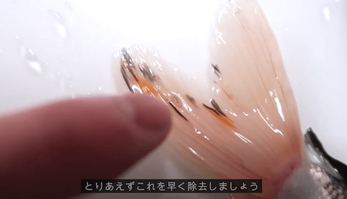 テヨンのお魚