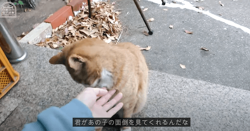 nct127 テヨンの手と猫