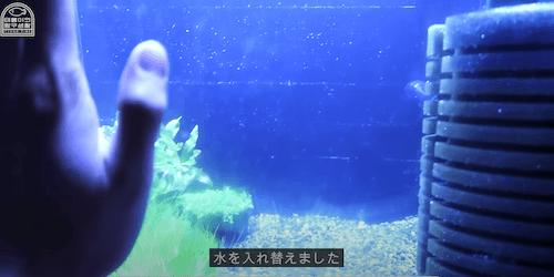 テヨンの水槽